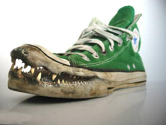 church growth consultants alligator shoes